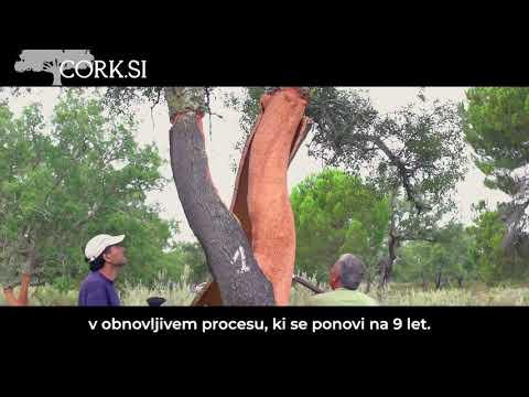 Kako od drevesa do torbice - CORK.SI
