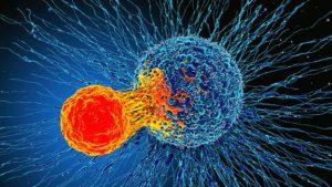 rakava in T celica