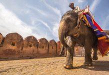 človek ki jaha slona