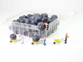 borovnice v plastični embalaži