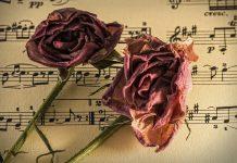 notno črtovje in vrtnici