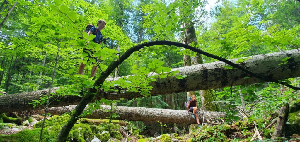 Otroka sredi gozda